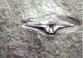 Fossilie